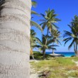 Coconut palm trees Caribbean tropical beach — Stock Photo #5511421