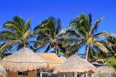 Coconut palm tree blue sky hut palapa sun roof — Stock Photo