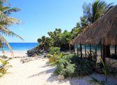 Coconut palm trees palapa hut beach — Stock Photo