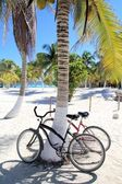 Bicycles bike on coconut palm tree caribbean beach — Stok fotoğraf