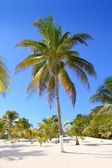Coconut palm trees white sand tropical paradise — Stock Photo