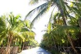 Coconut palm trees track road tropical — Stock Photo