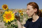Cute woman photographer in nature sunflower field — Stock Photo