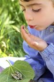 Kleine mädchen-austragungsortes mit seidenraupe in händen — Stockfoto