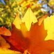 Autumn yellow golden leaf macro closeup outdoor forest - Stock Photo