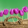 Basket pink tulips flowers in a row group line — Stock Photo