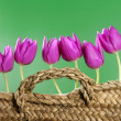 Basket pink tulips flowers in a row group line — Stock Photo #5555603
