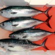 Bloody bluefin four tuna fish Thunnus thynnus catch - Stock Photo