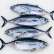 Bluefin four tuna fish Thunnus thynnus catch row — Stock Photo #5568180