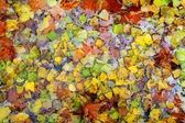 Autumn fall leaves colorful background in water — Stock Photo