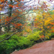 Autumn fall beech forest track yellow golden leaves - Stock Photo