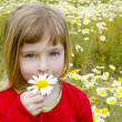 Blond little girl smeling daisy spring flower meadow - Stock Photo