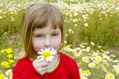Blond little girl smeling daisy spring flower meadow — Stock Photo