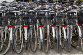Bicycles renting shop pattern rows parking — Stock Photo