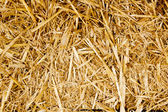 Bale golden straw texture ruminants animal food — Stock Photo