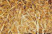 Bale golden straw texture ruminants animal food — Stock Photo