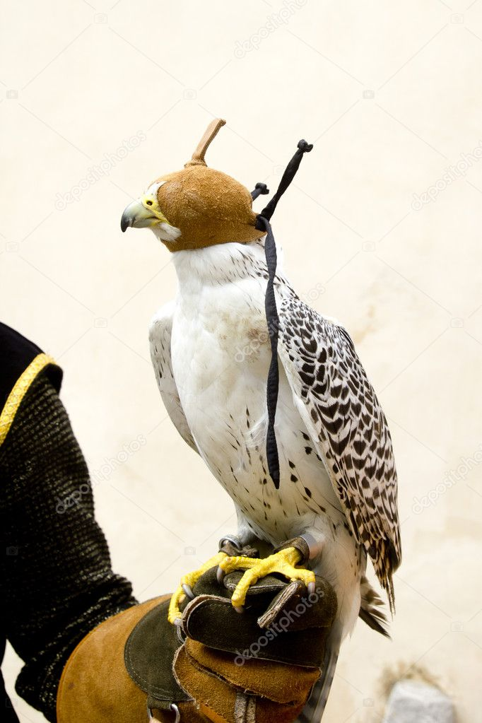 Falconry Equipment for Sale/Suppliers/Products Falconry Vest Dubai