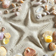 Beach white sand starfish print many clam shells — Lizenzfreies Foto