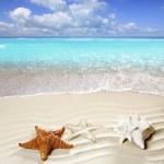 Caribbean tropical beach white sand starfish shell — Stock Photo #5935692