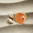 Royalty-Free Stock Photo: Beach sand pearl clam shell summer vacation