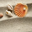 Beach sand pearl clam shell summer vacation — Stock Photo