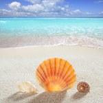 浜の砂シェル熱帯完璧な夏の休暇 — ストック写真
