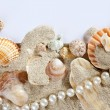 Copy space summer sand beach shells pearl blank — Stock Photo #5936066