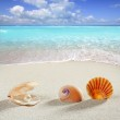 Beach summer vacation background shell pearl clam — Stock Photo #5936135