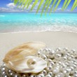 Caribbean pearl on shell white sand beach tropical - Stok fotoğraf