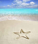карибский пляж морская звезда печати белый песок летом — Стоковое фото