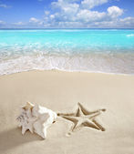 Caribbean beach starfish print shell white sand — Stock Photo