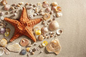 Beach white sand starfish many clam shells summer — Stock Photo