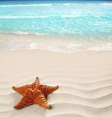 Caribbean beach starfish wavy white sand summer — Stock Photo