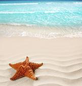 Caribbean beach starfish wavy white sand summer — Stock Photo