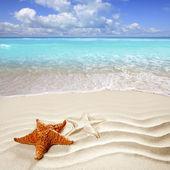 Caribbean tropical beach white sand starfish shell — Foto de Stock