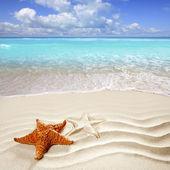 Caribische tropisch strand wit zand starfish shell — Stockfoto