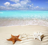 Caribbean tropical beach white sand starfish shell — Stock Photo