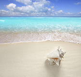 Beach sand pearl necklace shell summer vacation — Stock Photo
