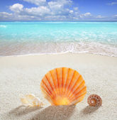 Beach sand shell tropical perfect summer vacation — Stock Photo