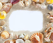 Border frame summer beach shell blank copy space — Stock Photo