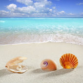 Beach summer vacation background shell pearl clam — Stock Photo