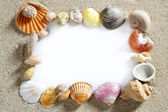 Border frame summer beach shell blank copy space — Stockfoto