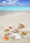Caribbean beach sand shells tropical summer vacation — Stock Photo