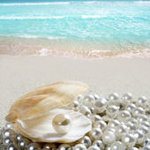 Caribbean pearl on shell white sand beach tropical — Stock Photo