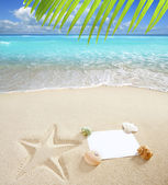 Caribbean beach sea blank copy space starfish shells — Foto Stock