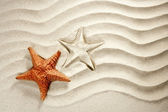 Beach white wavy sand starfish summer vacation — Stock Photo