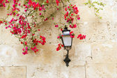 Bougainvilleas in stone wall and street light in Mediterranean — Stock Photo