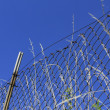 Wire mesh fence — Stock Photo #6312668