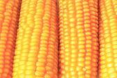 Ripe corn — Stock Photo