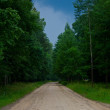 Road to the forest — Stock Photo #6369578